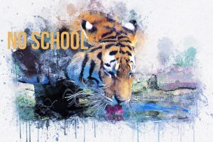 """Tiger drinking art with text """"no school"""""""