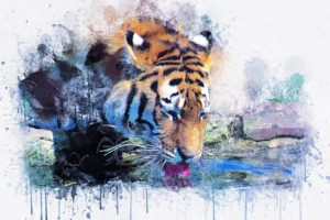 Tiger lapping up water in a stylized picture with dripping paint.
